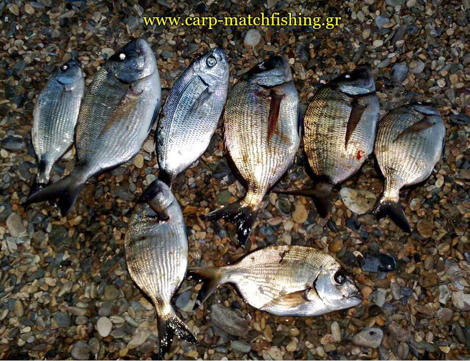 serifos-psarema-sargoi-casting-carpmatchfishing