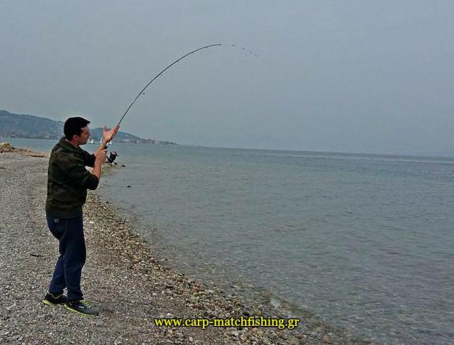 eging-cuttlefish-rod-papa-carpmatchfishing
