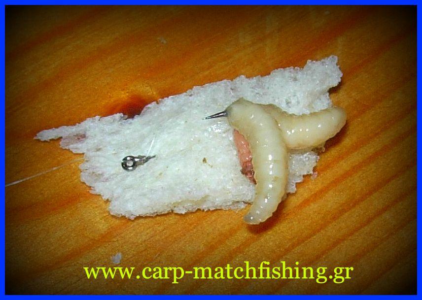 mikti-dolosia-maggots-biggattino-carp-matchfishing-gr.jpg
