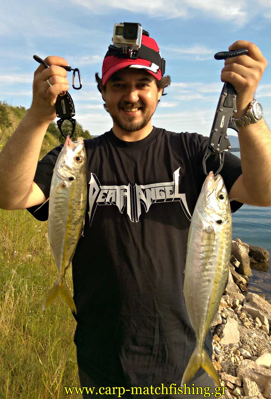 ajing-2-kokkalia-carpmatchfishing