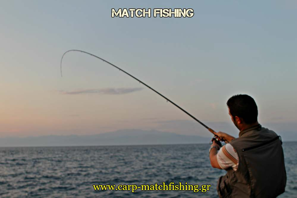 match-fishing-rod-curve-carpmatchfishing