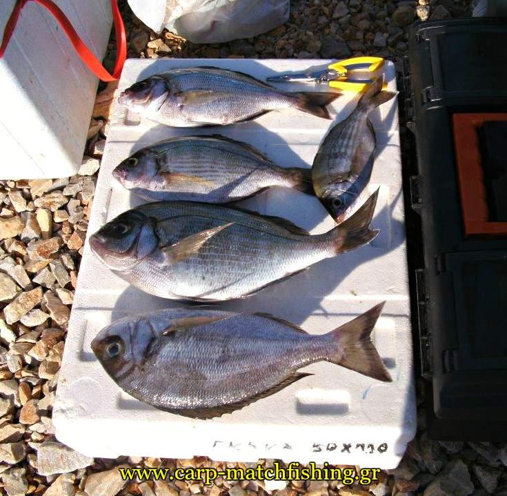 trikeri-casting-skatharia-carpmatchfishing