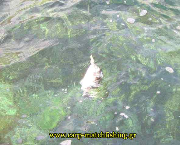 tsipoura-water-monodoli-carpmatchfishing