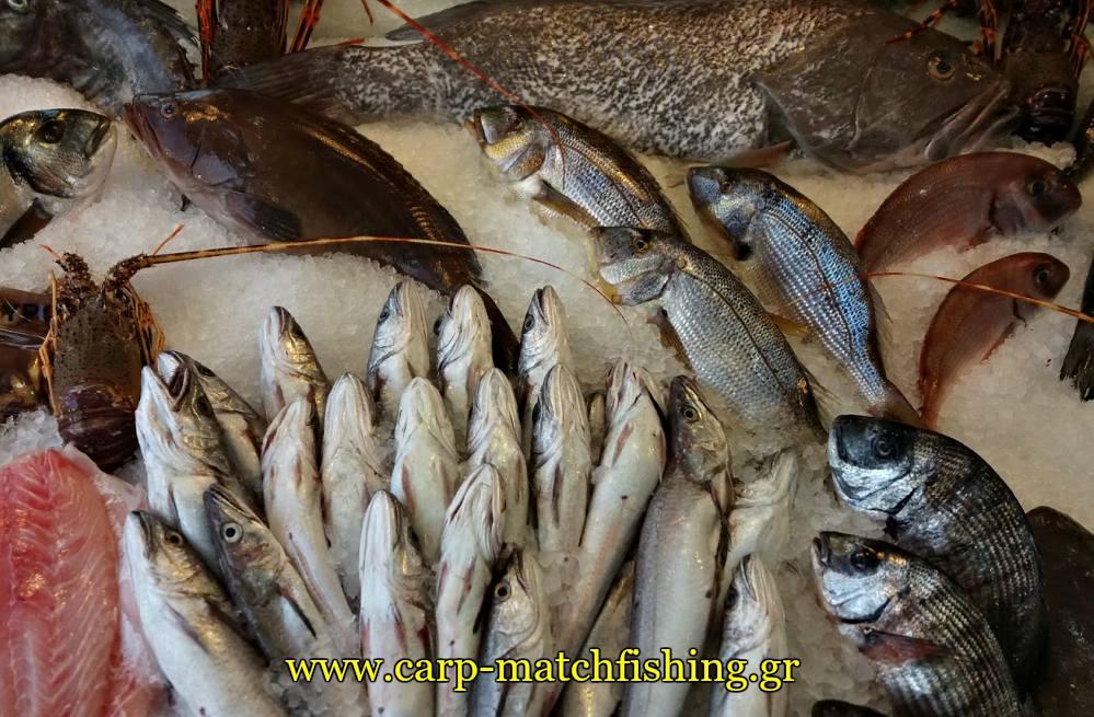 psaria carpmatchfishing