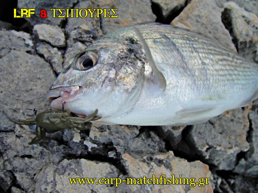 lrf-kai-tsipoures-crab-mouth-light-rock-fishing-carpmatchfishing