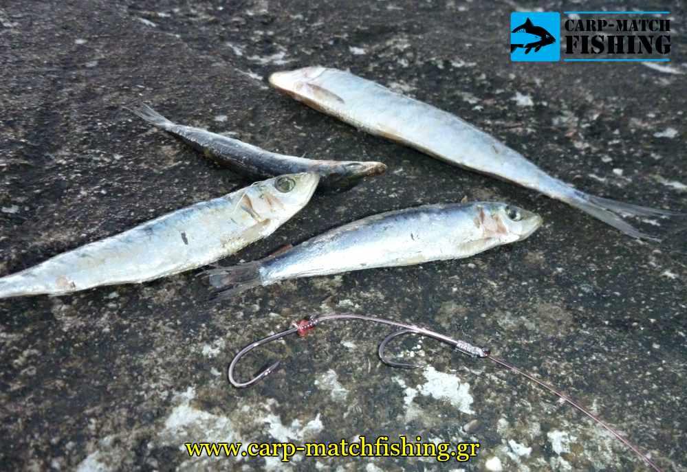 psarema palamidas psarodolia casting carpmatchfishing
