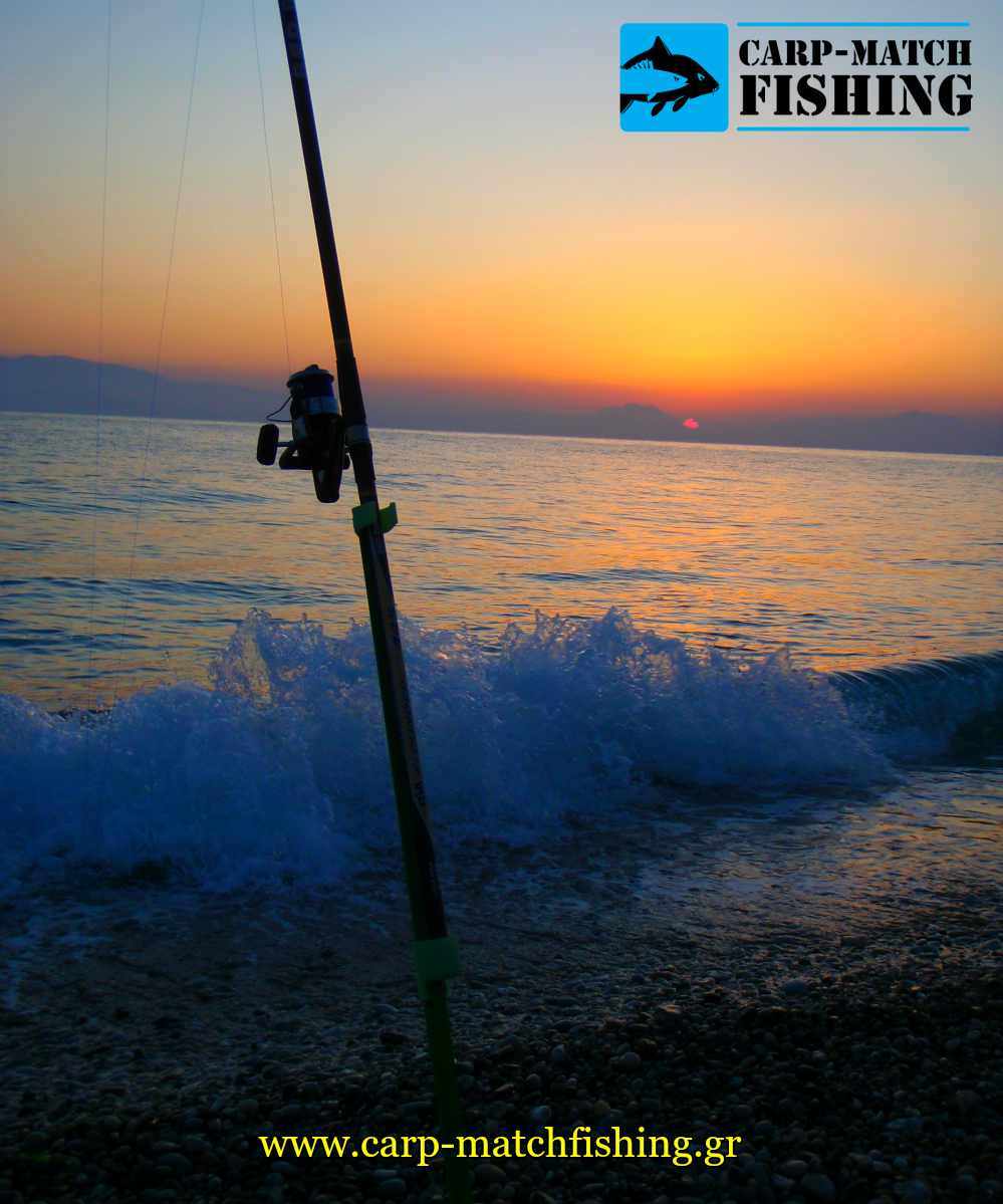 casting in sunset sargos rod carpmatchfishing