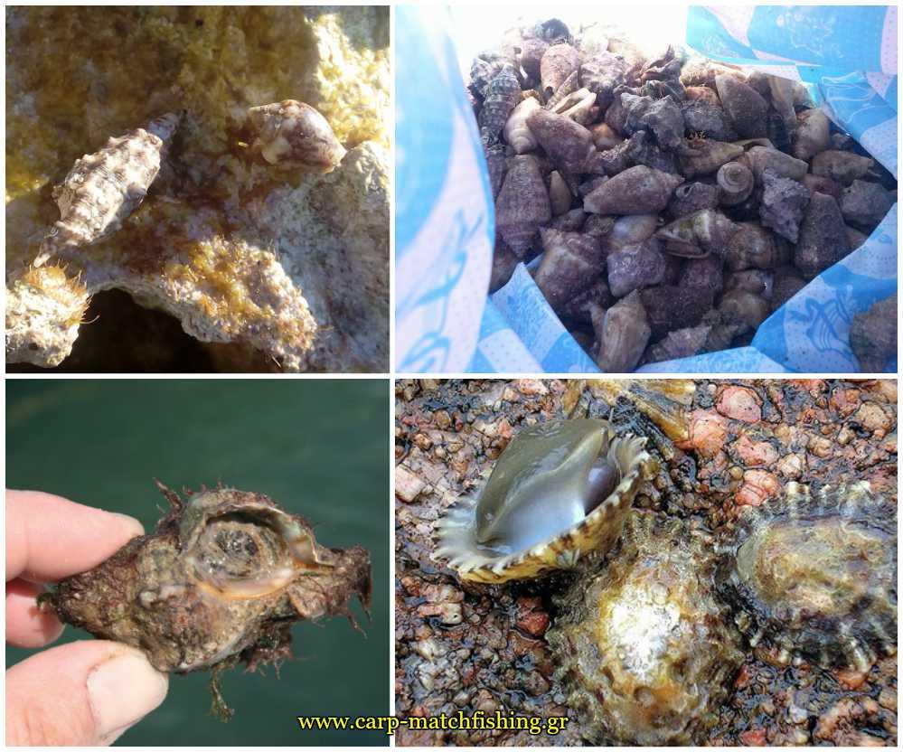 skartsinia-koxylia-petalides-dolomata-carpmatchfishing