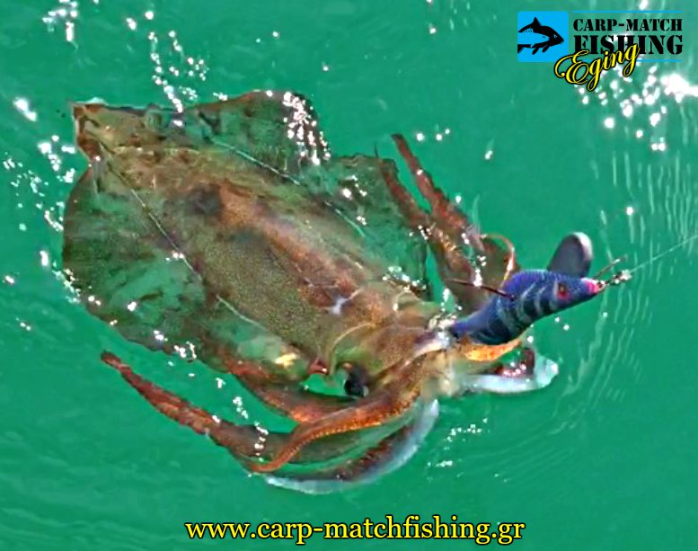 eging northen squid water jig psarema apo vraxia kalamari carpmatchfishing