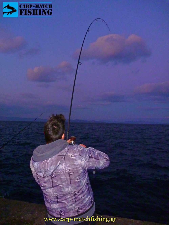 psarema palamidas pap rod curve casting carpmatchfishing