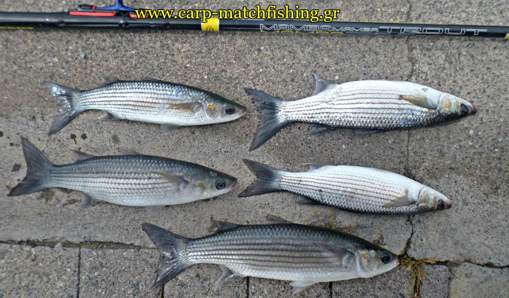 match-fishing-kefaloi-carpmatchfishing