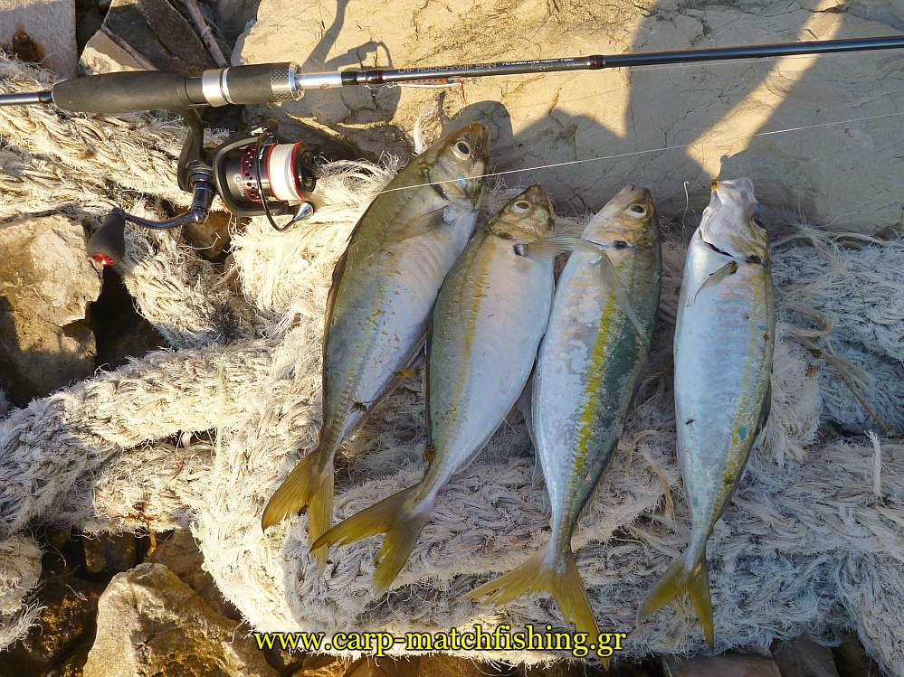 kokkalia-ajing-light-rock-malagra-down-carpmatchfishing