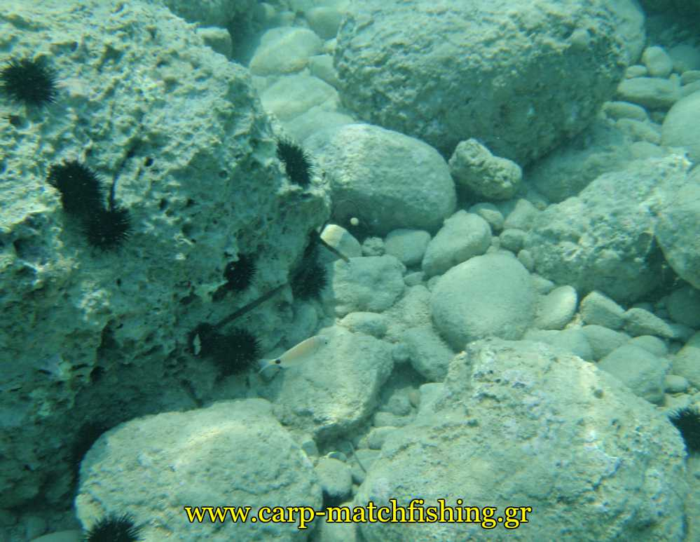 melanouria-vythos-casting-floats-carpmatchfishing
