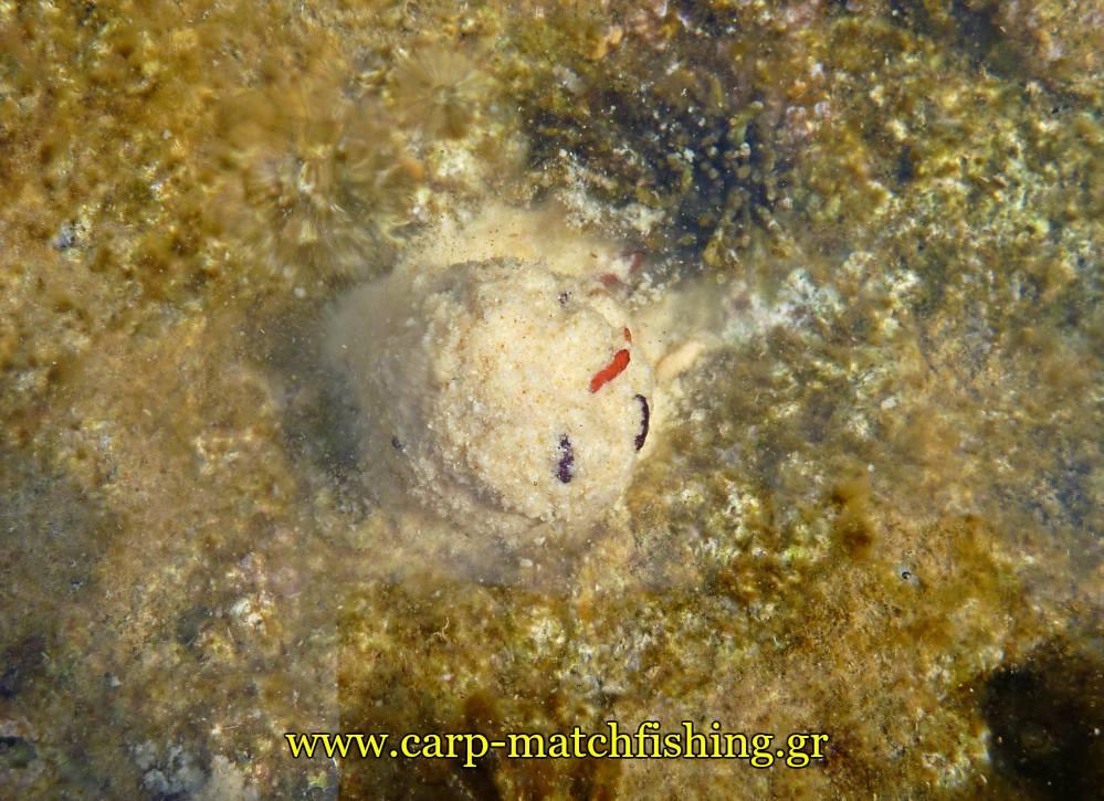 angry-fish-groundbait-malagra-lavrakia-matchfishing-carpmatchfishing