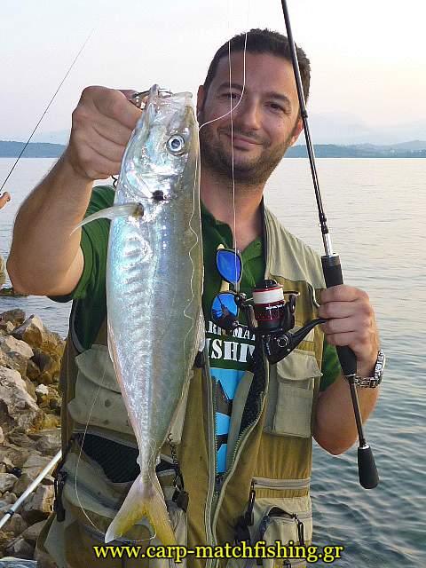 big-kokkali-sfaltos-ajing-malagra-carpmatchfishing