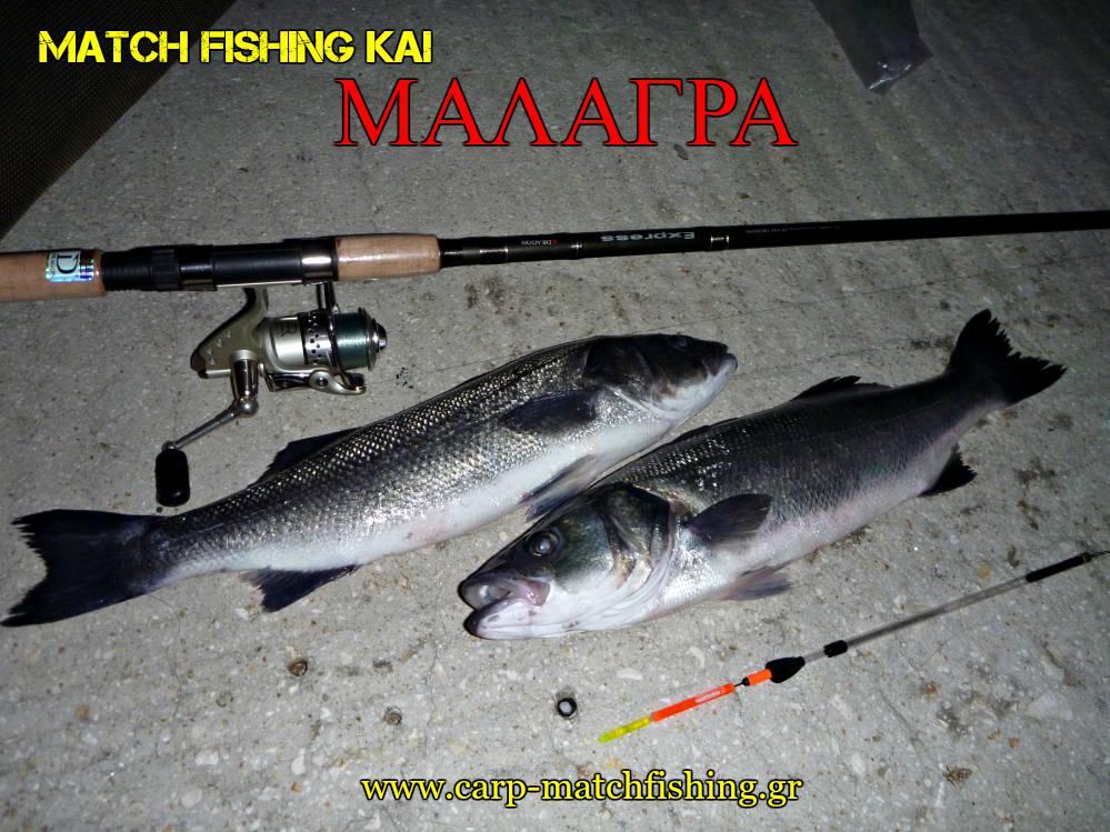 matchfishing-malagra-lavrakia-2-angry-fish-carpmatchfishing