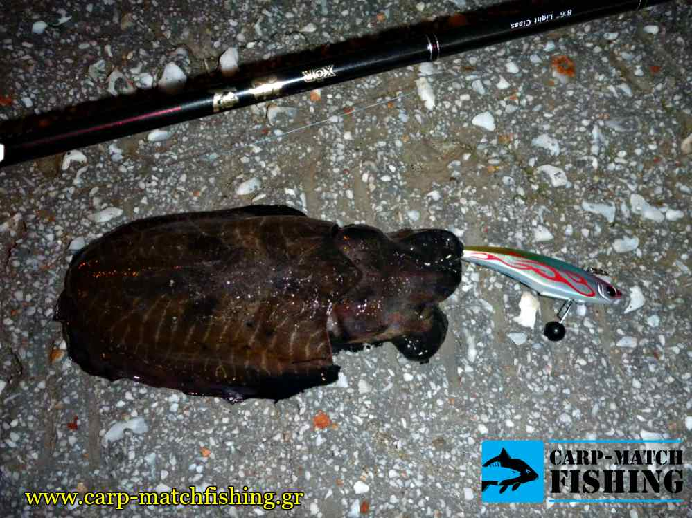 eging soupia kalamariera carpmatchfishing