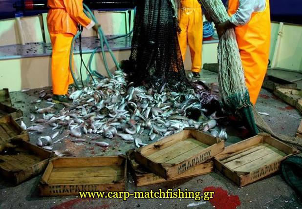 psarema me trata petamena psaria stin thalassa carpmatchfishing