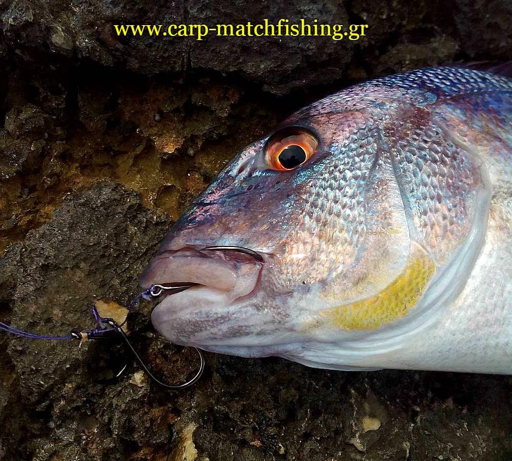 bait-boat-piasmeni-synagrida-carpmatchfishing
