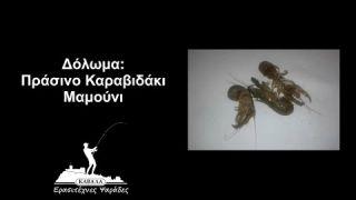 Δόλωμα: Πράσινο Καραβιδάκι/Μαμούνι