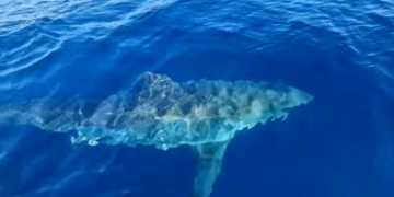 Βγήκαν για ψάρεμα και τους πήρε στο κυνήγι λευκός καρχαρίας έξι μέτρων (pic & vid)